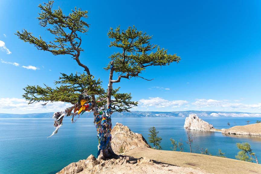 lake baikal tree of desire