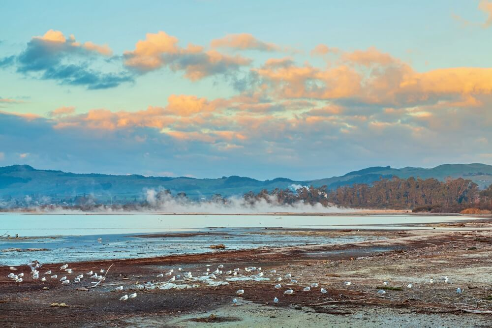 lake rotorua geothermal activity