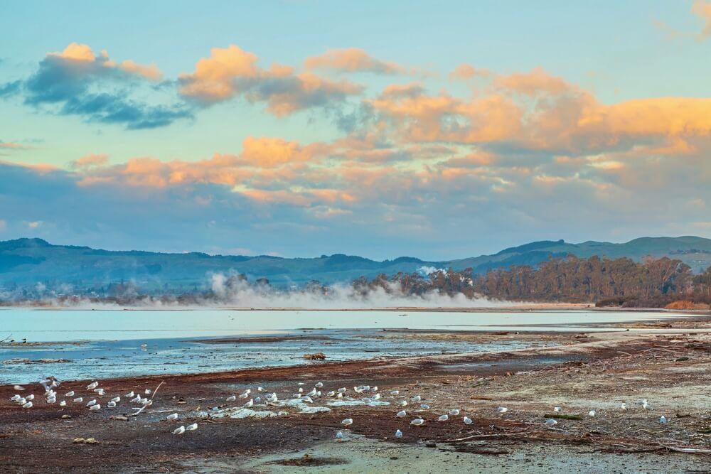 lake rotorua geothermal activity